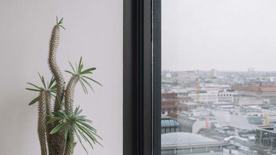 cactus-window-skyline-1152x648-lindenpartners-Berlin